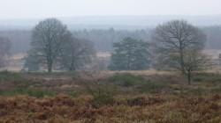 Rundweg Wahner Heide