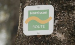 Narzissenroute